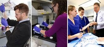 Biomedical Engineering Job Description Unique Biomedical Engineering University Of Rochester