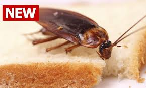 how to get rid of roaches in bedroom home design