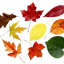 How To Identify Trees By Leaves Bark Shape More With