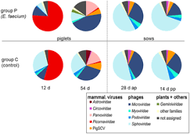 the general composition of the faecal virome of pigs depends on figure 3