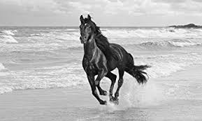 running horses black and white. Wonderful White LARGE HORSE CANVAS ART PRINT RUNNING IN THE SEA BLACK AND WHITE BOX  34 X 20 INCHES 86 X 51 Cm Mounted And Ready To Hang By INTERIORS  With Running Horses Black And White S