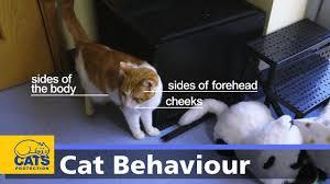 Cat Body Language Chart Body Language In Cats