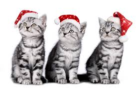 Christmas Kittens Desktop Wallpapers ...