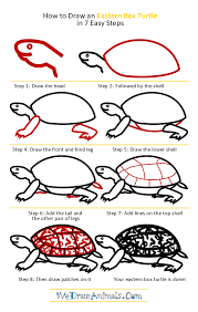Small Picture How to Draw an Eastern Box Turtle