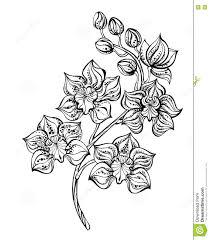 орхидея контура иллюстрация вектора иллюстрации насчитывающей