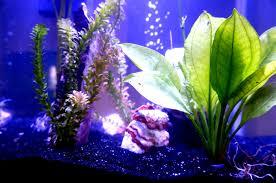 Fun Fish Tank Decorations New Terrarium Diy Smart Planted Fish Tanks The Clever Life