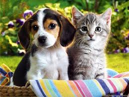cute kittens and puppies together wallpaper. Perfect Cute Intended Cute Kittens And Puppies Together Wallpaper