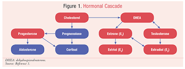 Navigating Female Hormones A Pharmacists Guide To Hrt