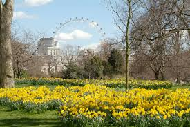 william wordsworth s endearing poem daffodils may have sent narcissus scurrying to the english lake district but there are other equally rewarding