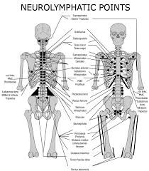 Kinesiology Muscle Chart Applied Kinesiology