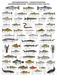 Freshwater Fish Chart Freshwater Fish