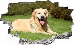 Hunde Golden Günstig Sicher Kaufen Bei Yatego