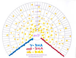 Mt Dna Pedigree Collapse And Collapse Over Folks Mistakes