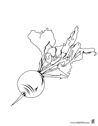 Beetroot Coloring Page This Beetroot Coloring