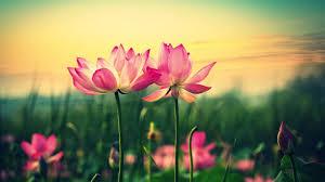 high resolution flower desktop