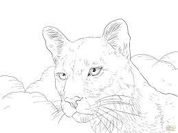 mountain lion coloring page mountain lion coloring pages printable mountain lion coloring sheet