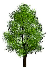 pin Tree clipart transparent background #4