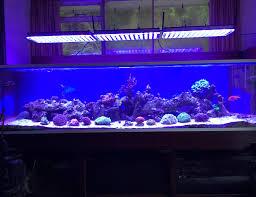 uk client pleased atlantik v3 reef lights
