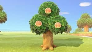あつ 森 フルーツ 食べる