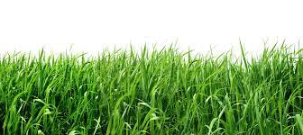 grass png. Wonderful Grass Resolution 1800 X 805  Format PNG Keywords Nature Green Grass  Field Lawn On Grass Png T