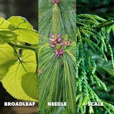 Ohio Leaf Identification Chart How To Identify Trees By Leaves Bark Shape More With