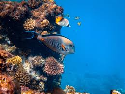 100+ Fish Images