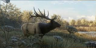 Roosevelt Elk Thehunter Call Of The Wild Wiki Fandom
