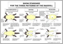 Ragdoll Cat Size Chart Ragdoll Standard Of Points Ragdoll