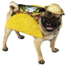 5 Of The Best Halloween Costumes For Dogs
