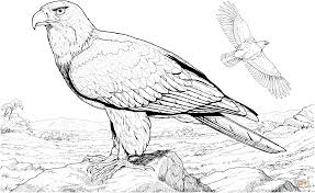 bald eagle template american bald eagle coloring page free printable coloring pages
