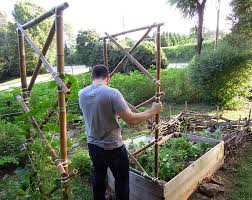 getting the trellis in place