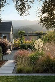 Tall Decorative Grass 17 Best Ideas About Perennial Grasses On Pinterest Ornamental