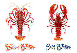 The Differences To Know Between Maine Canadian Lobsters