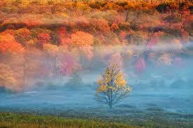 Image result for arkansas fall colors public use