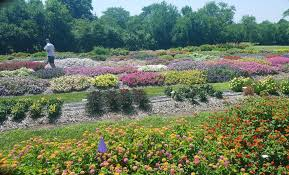 a trip to the k state bedding plant trials grimm s gardens