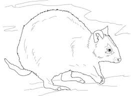 Small Picture Rottnest Quokka coloring page Free Printable Coloring Pages