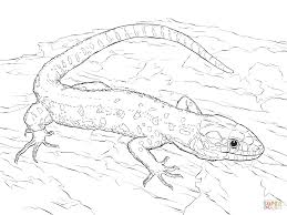 Small Picture Yellow Spotted Tropical Night Lizard coloring page Free