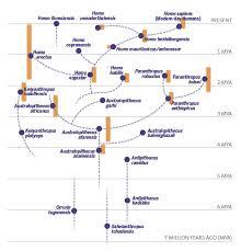 Hominin Chart A New Hominin A Sediba Neurologica Blog