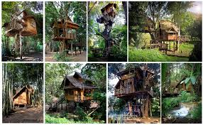 The 25 Best Treehouse Hotel Ideas On Pinterest  Amazing Tree Treehouse Accommodation Ireland