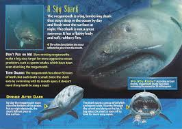 megamouth shark sharks megamouth shark and the o jays the improbable looking megamouth shark
