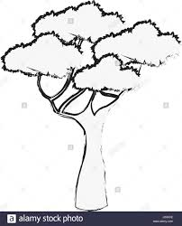 african tree vector. stock vector - african tree foliage high forest sketch