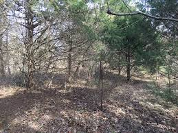 southern illinois deer hunting tract building lake sites southern illinois deer hunting tract building lake sites for