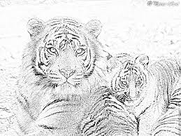 Coloriage A Imprimer Un Tigre Coloriage Imprimer
