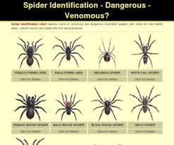 Arizona Spiders Identification Chart Spider Identification Chart Disgusting But Helpful