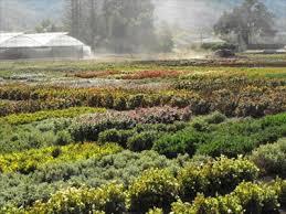 goldsmith seeds flower fields gilroy california flower fields on waymarking