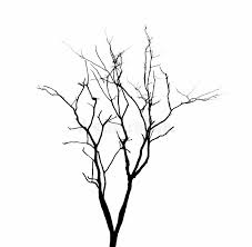 Download Dead Tree Branches Isolated. Stock Image - Image of white,  isolated: 44364043