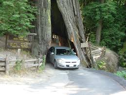 each of these drive through trees is privately owned so you have to pay a fee to drive through them