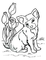 Chihuahua Coloring Page Husky Dog Coloring Pages Printable Free