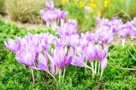 14 Best Landscape Plants With <b>Purple Flowers</b>