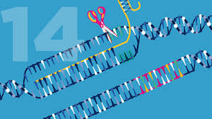 Genome Editing April 24 Genome Editing National Human Genome Research Institute